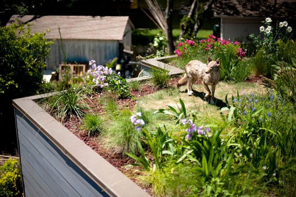 Fördelar med ett grönt tak 12 fördelar med ett grönt tak