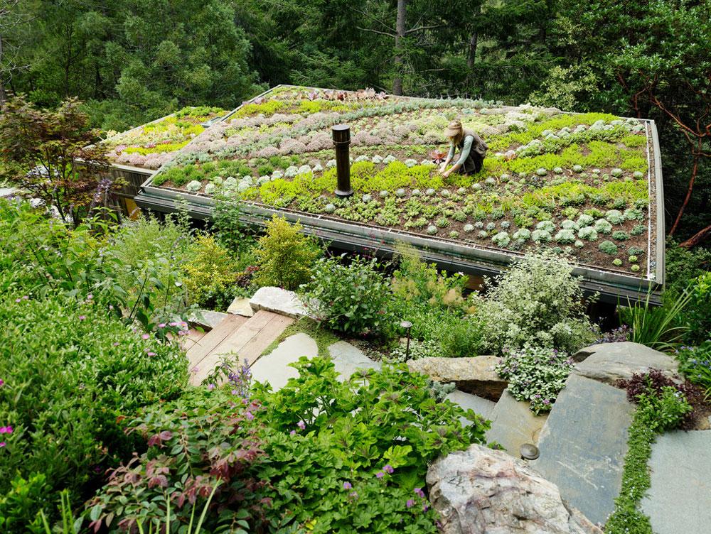 Fördelar med ett grönt tak 6 fördelar med ett grönt tak