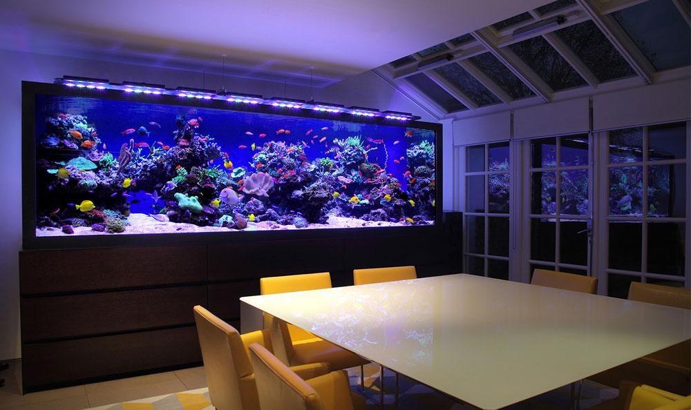 Ändra utseendet på ditt rum med denna akvarietank 4 Ändra utseendet på ditt rum med dessa akvarietankar