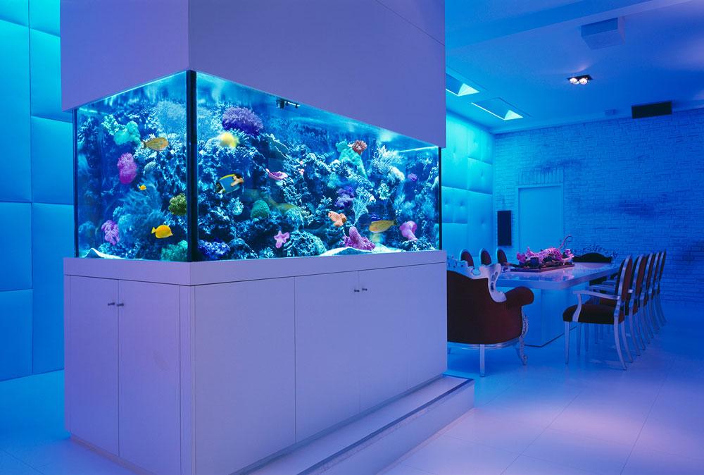 Ändra utseendet på ditt rum med denna akvarietank 1 Ändra utseendet på ditt rum med dessa akvarietankar