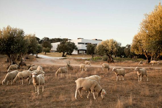 casa3 Alla vita väggar Villa Extramuros i Arraiolos Designad av Vora Arquitectura