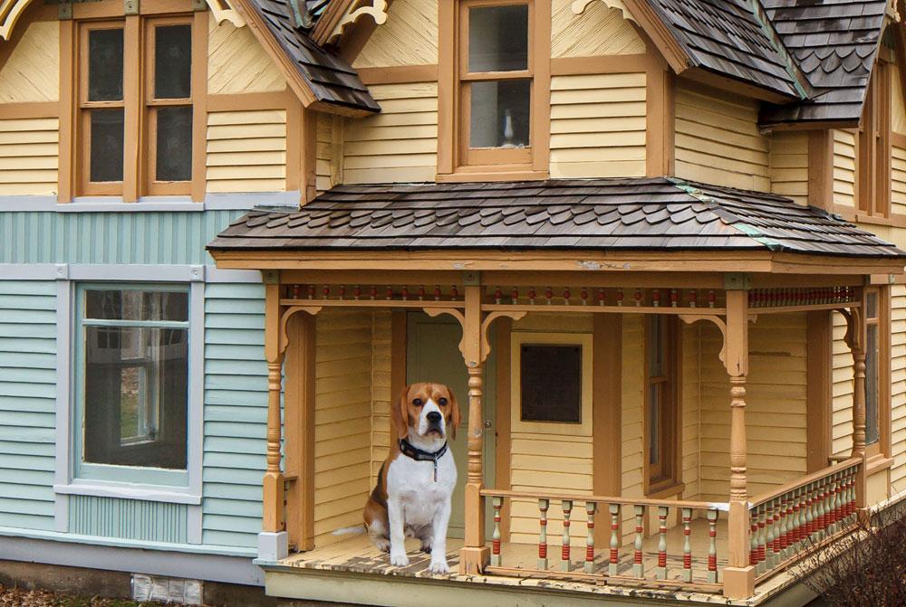 Hus-idéer-för-mans-bästa-vän-3 hus-idéer för människans bästa vän