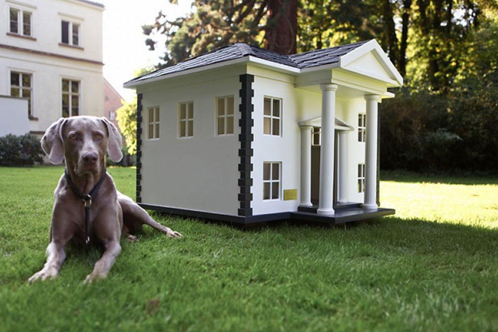 Hus-idéer-för-mans-bästa-vän-9 hus-idéer för människans bästa vän