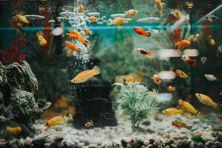 Ändra utseendet på ditt rum med dessa Home Aquarium Tanks