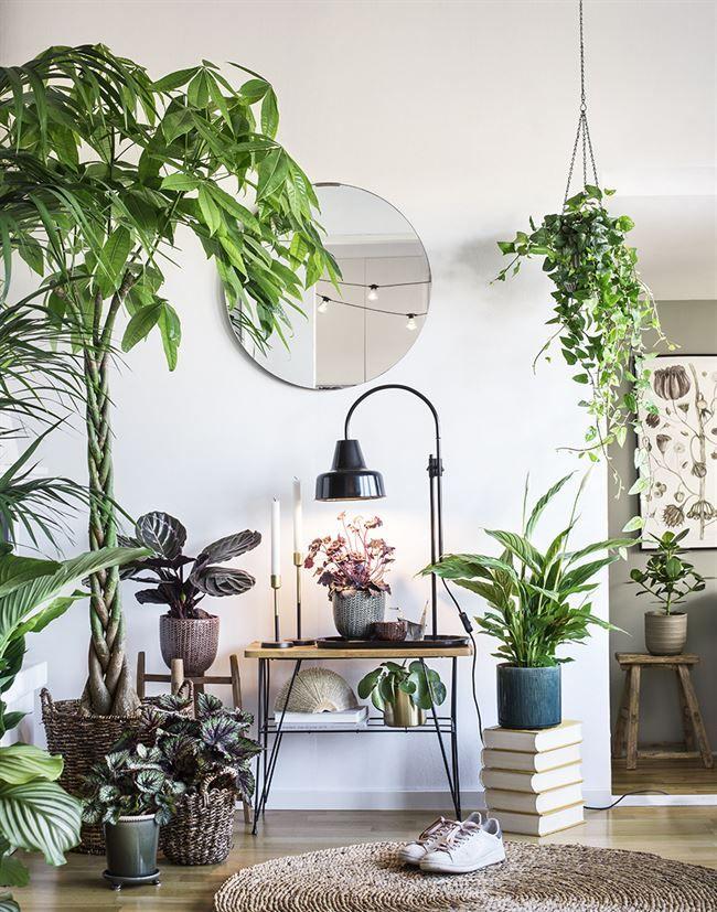 Dekorera interiören i ditt hem med växter
